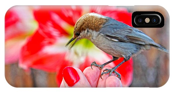 Nuthatch Bird Friend IPhone Case