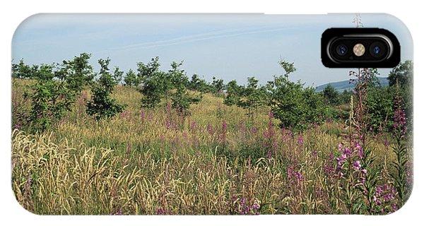Oak Reforestation IPhone Case
