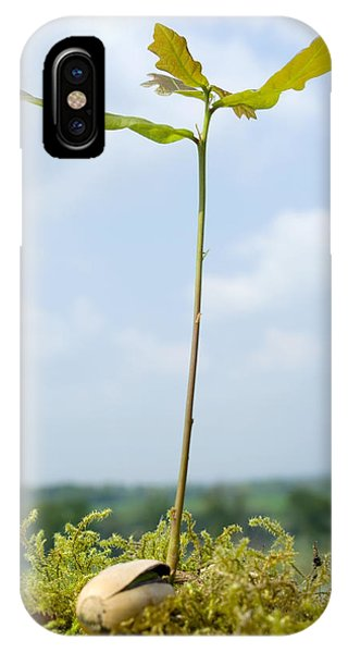 Oak Sapling (quercus Robur) Phone Case by Georgette Douwma