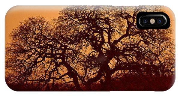 Oak Tree At Sunset IPhone Case