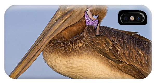 Avian iPhone Case - Once Upon A Time  by Betsy Knapp