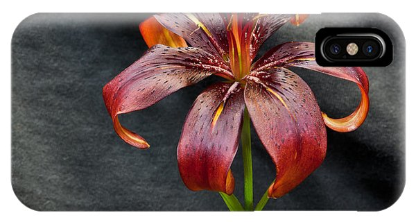 One Black Lily IPhone Case
