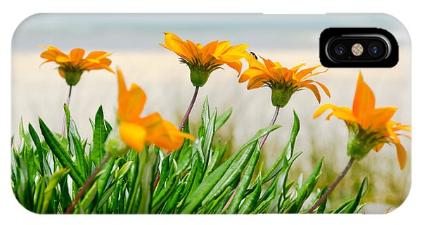 Orange Flowers On The Sunny Ocean Beach. IPhone Case