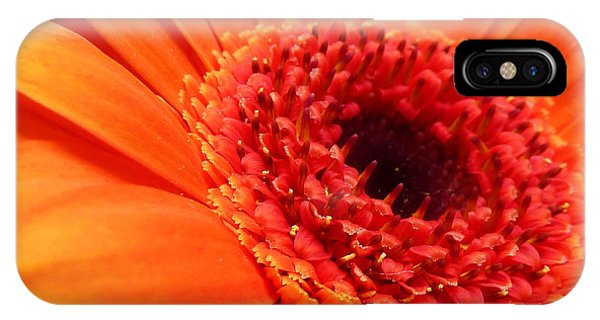 Orange Gerbera Close Up IPhone Case