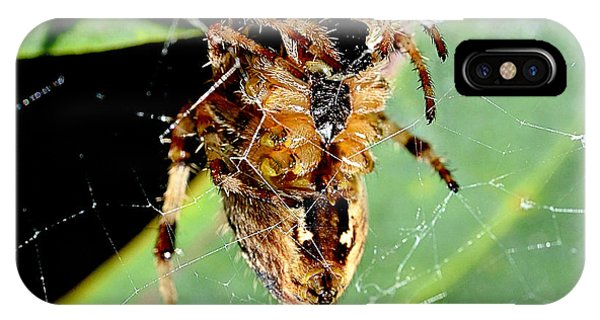 Orb Weaver Waits IPhone Case
