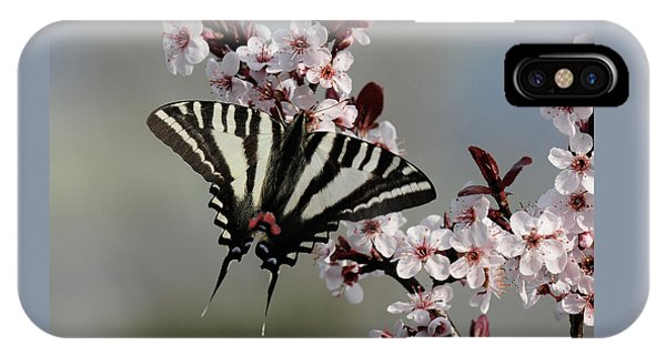 Ornamental Plum Blossoms With Zebra Swallowtail IPhone Case