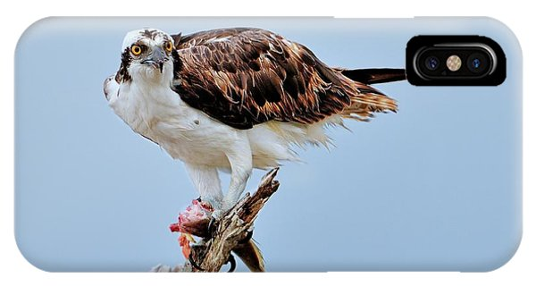 Osprey In The Morning IPhone Case