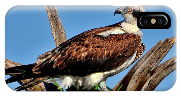 Osprey On A Windy Morning IPhone Case