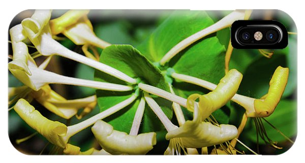 Overblown Perfoliate IPhone Case