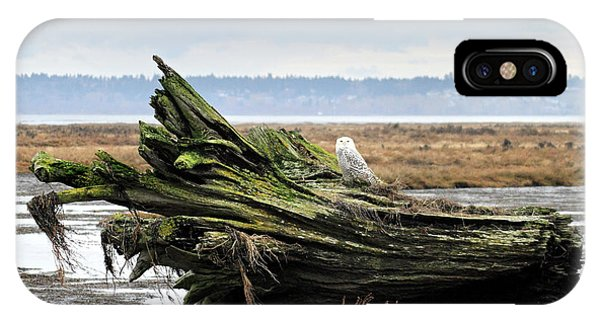 Owls At Boundary Bay Vancouver Phone Case by Pierre Leclerc Photography