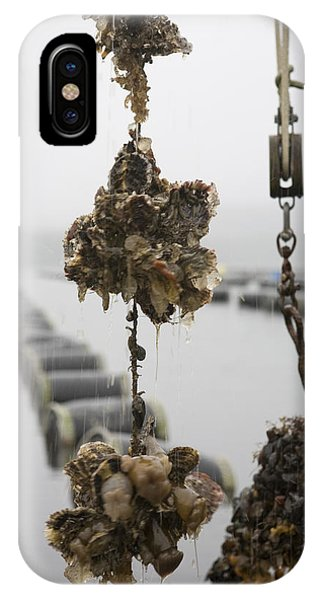 Oysters Pulled Up From A Farm Covered IPhone Case