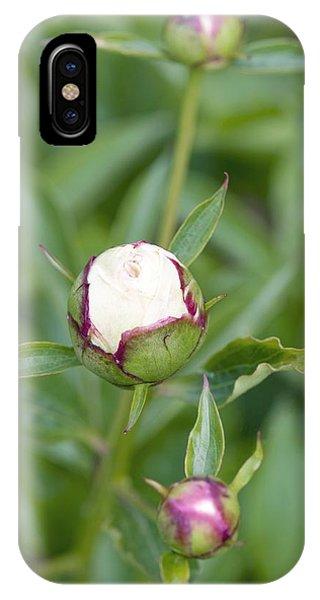 Paeonia Lactiflora 'shirley Temple' IPhone Case
