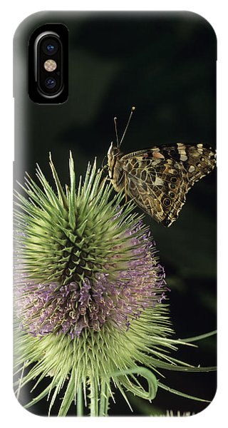 Painted Lady Butterfly Phone Case by David Aubrey