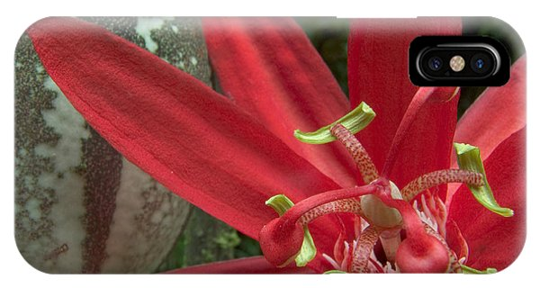 Passion Flower Blossom Costa Rica IPhone Case