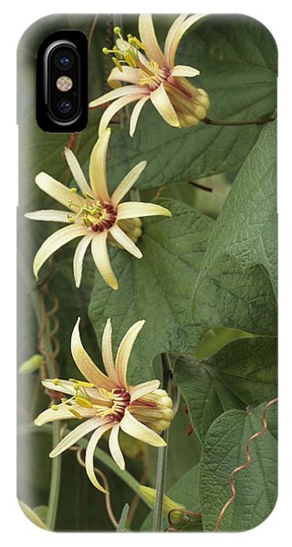 Passionflower IPhone Case
