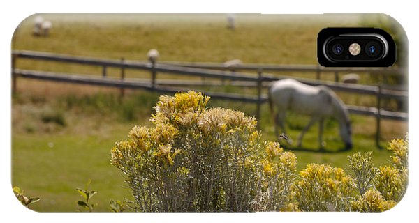 Pastures IPhone Case
