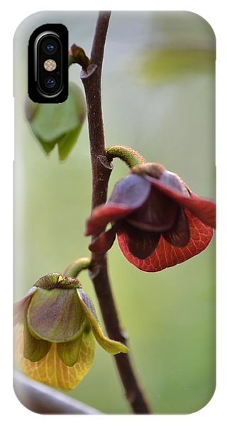 Paw-paw Flowers IPhone Case