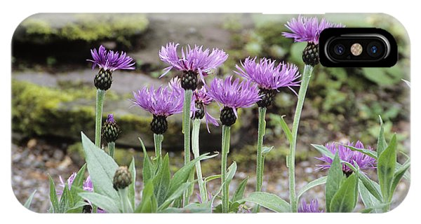 Perennial Cornflowers 'parham' IPhone Case