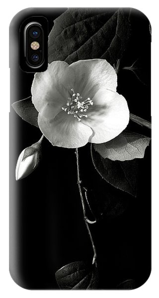 Philadelphus In Black And White IPhone Case