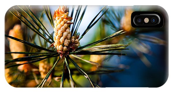Pine Cone And Needles IPhone Case