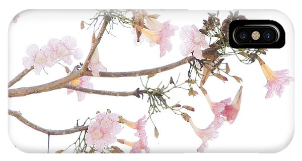 Pink Blossoms In Panama IPhone Case