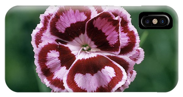 Pink (dianthus 'becky Robinson') IPhone Case