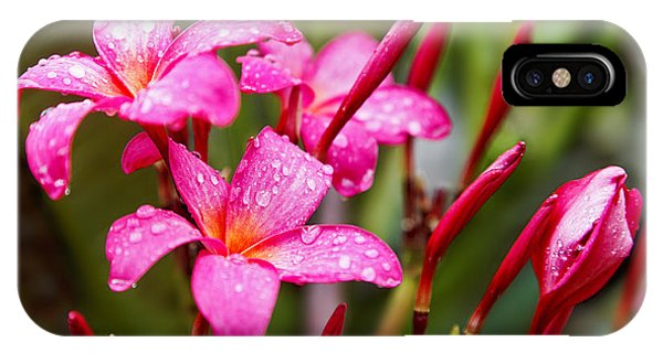Pink Fluted Hibiscus In The Monsoons Phone Case by Kantilal Patel