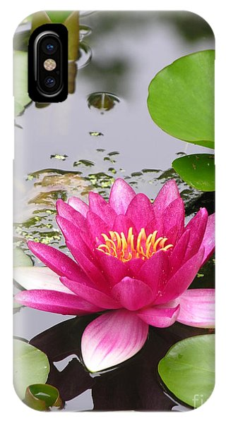 Lily iPhone Case - Pink Lily Flower  by Diane Greco-Lesser