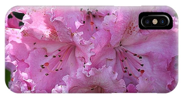 Pink Rhododendrons IPhone Case