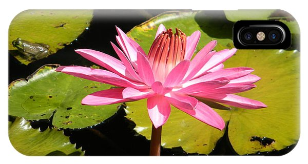 Pink Water Lilly With Frog IPhone Case