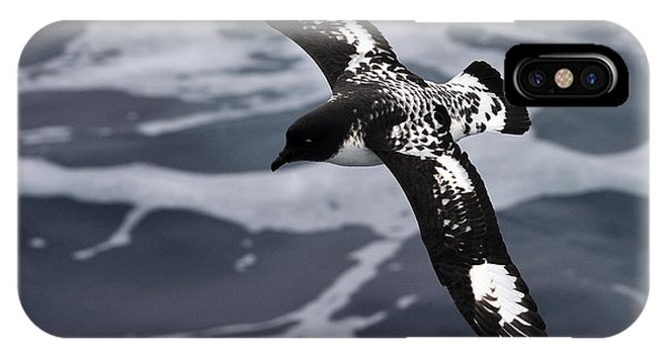 Pintado Petrel - Ancient Mariner IPhone Case