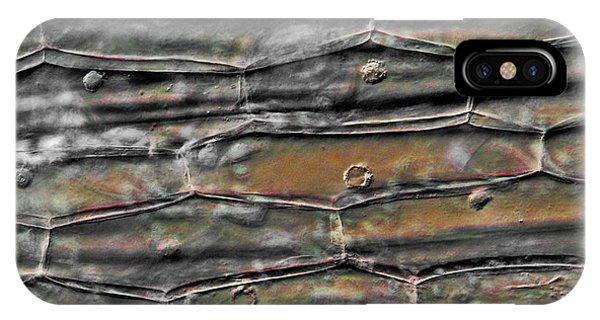 Tradescantia iPhone Case - Plant Cells, Light Micrograph by Robert Markus