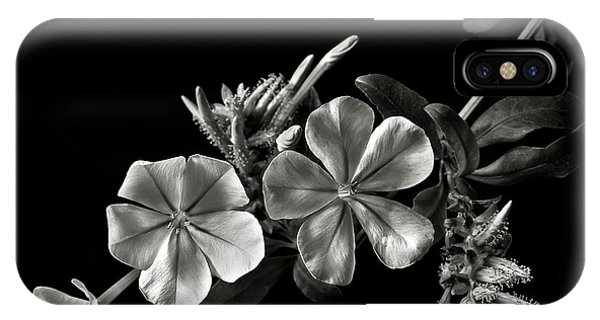 Plumbago In Black And White IPhone Case
