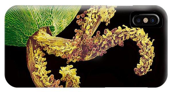 Pollinated Flower Pistil, Sem Phone Case by Susumu Nishinaga