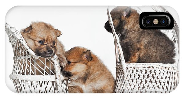 Pomeranian iPhone Case - Pomeranian 3 by Everet Regal