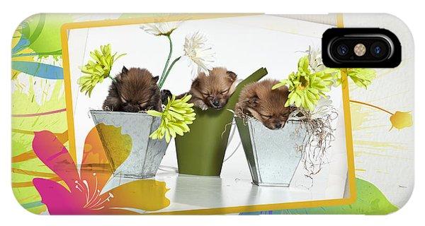 Pomeranian iPhone Case - Pomeranian 4 by Everet Regal