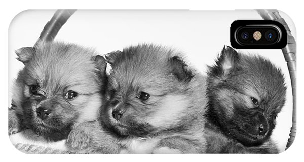 Pomeranian iPhone Case - Pomeranian by Everet Regal