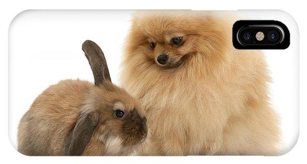 Pomeranian iPhone Case - Pomeranian With Dwarf Lionhead Lop by Jane Burton