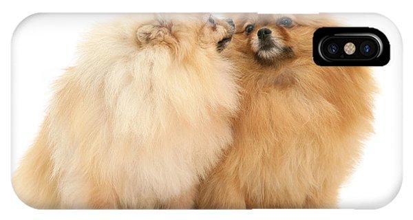Pomeranian iPhone Case - Pomeranians by Jane Burton
