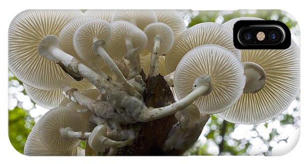 Porcelain Mushroom (oudemansiella Mucida) Phone Case by Dr Keith Wheeler