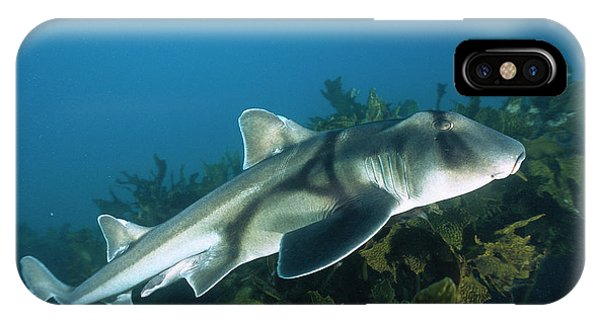 Jervis iPhone Case - Port Jackson Shark Heterodontus by Mike Parry