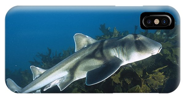 Jervis iPhone Case - Port Jackson Shark by Mike Parry