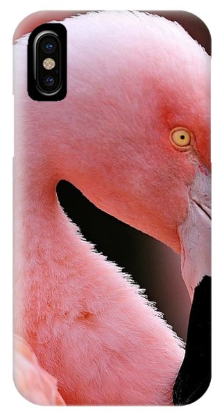 Portrait Of A Flamingo IPhone Case