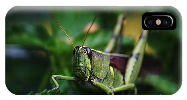 Portrait Of A Grasshopper IPhone Case