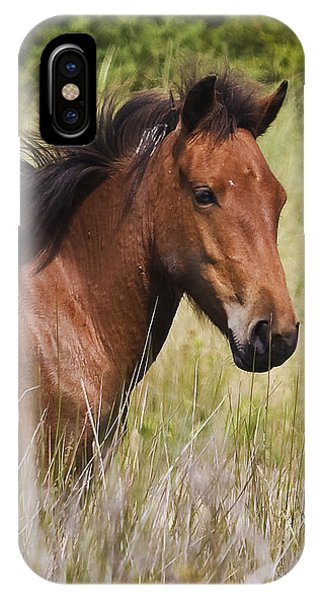Portrait Of A Spanish Mustang IPhone Case
