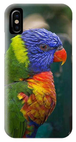 Posing Rainbow Lorikeet. IPhone Case