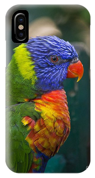 Posing Rainbow Lorikeet. IPhone Case