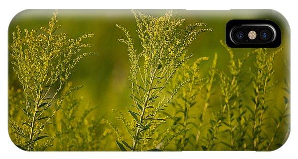 Horicon Marsh iPhone Case - Prairie Goldenrod by Steve Gadomski