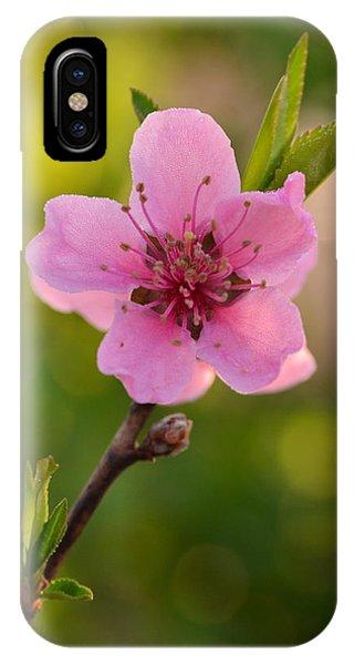 Pretty Pink Peach IPhone Case