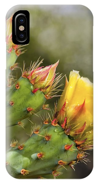 Prickly Pear Flowers IPhone Case